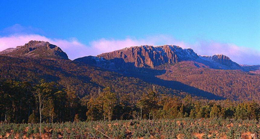 captial-cities-tasmania-bushland