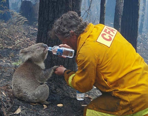 The Role of Fires in Australia